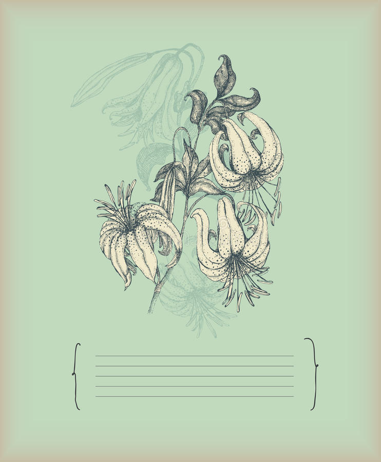Download Vintage lily drawing stock vector. Illustration of flower - 13968846