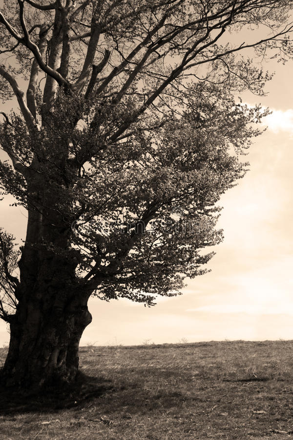 Vintage looking tree royalty free stock photo