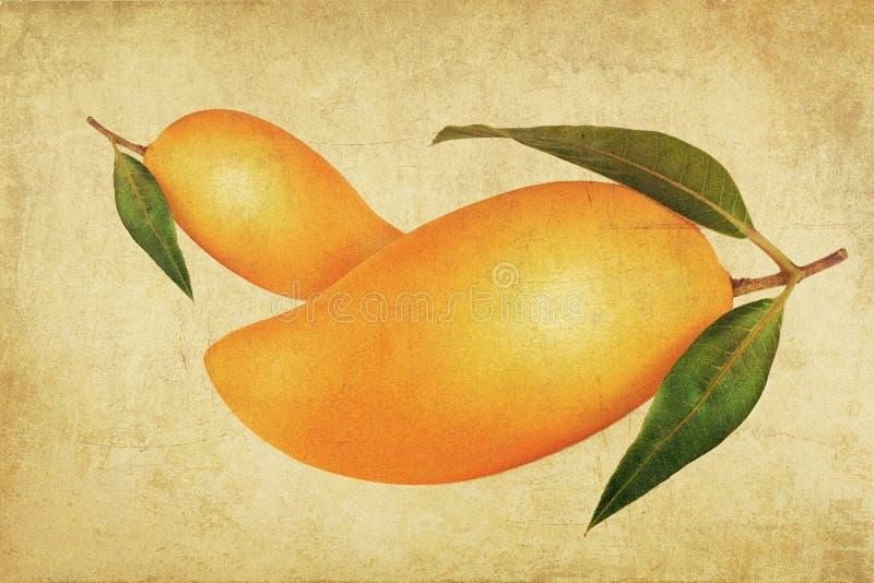 Vintage mango stock image
