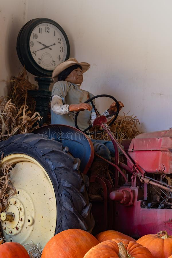Vintage manikin of hispanic native amercian farm worker driving an old antique tractor with large orange pumpkins in the foregroun stock images