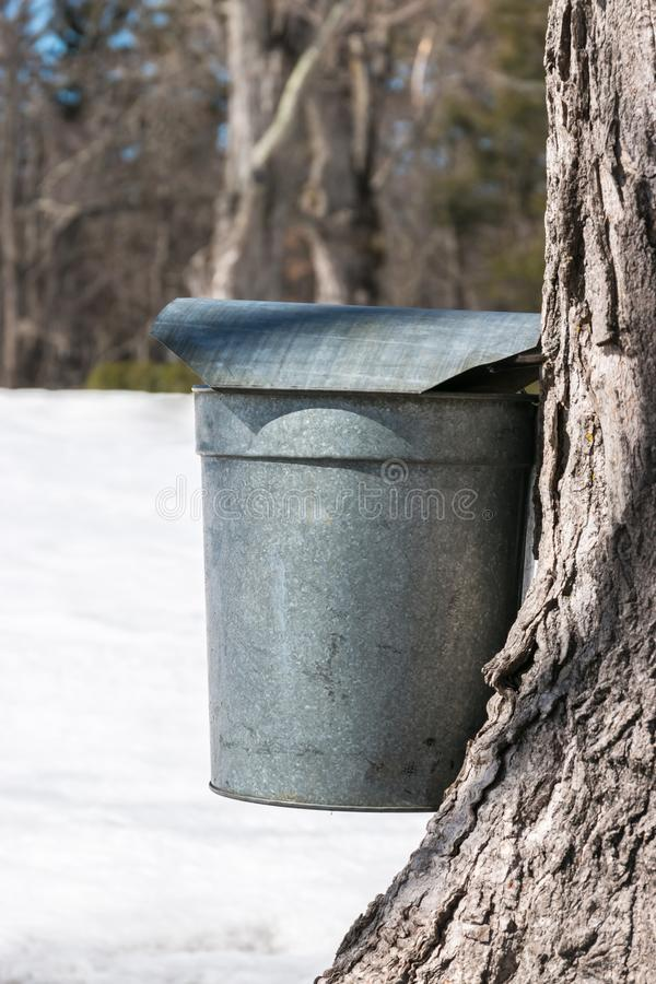 Vintage Maple Syrup or Sap Bucket with Woods and Snow. Vertical, Early Spring royalty free stock photography