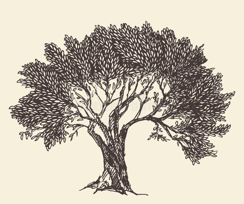 Vintage Olive Engraved Background Illustration vector illustration