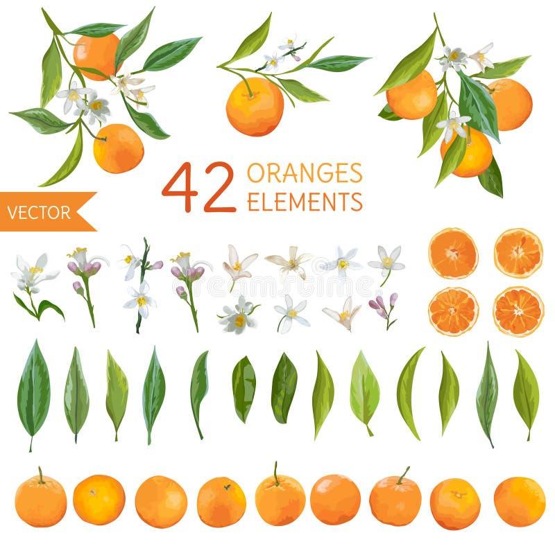Vintage Oranges, Flowers and Leaves. Lemon Bouquetes stock illustration