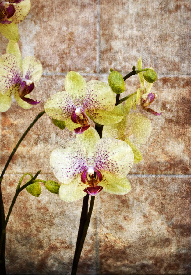 Download Vintage orchid stock photo. Image of colors, vintage - 14380180