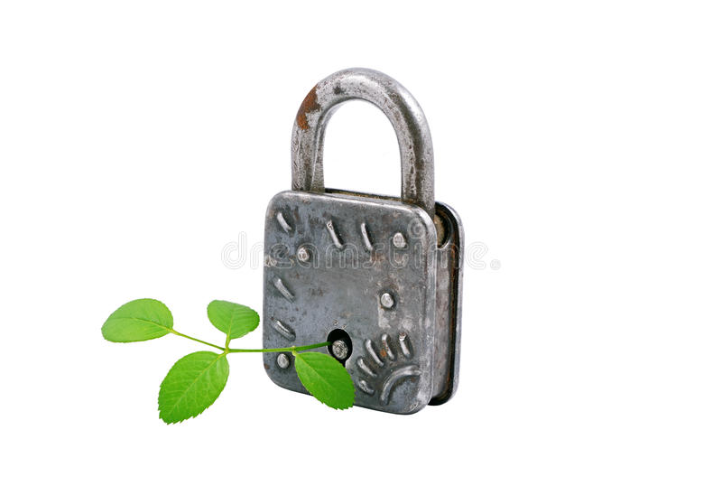 Download Vintage Padlock And Green Plant, Stock Image - Image: 19937507