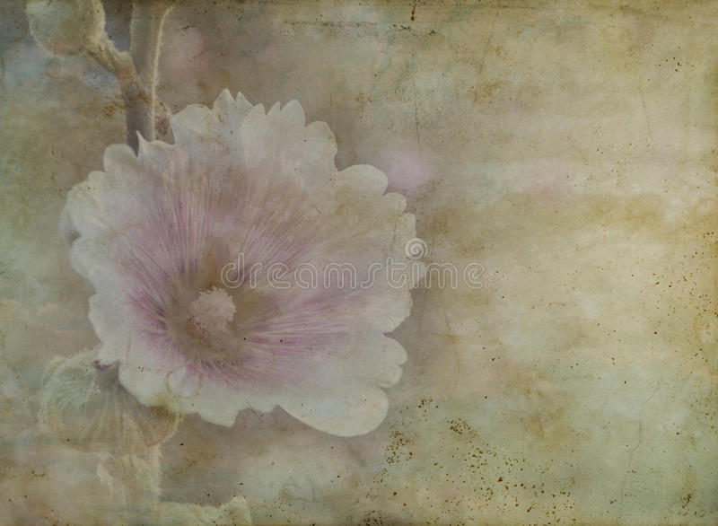 Vintage paper of beautiful pink wild flower. Retro style royalty free stock photo