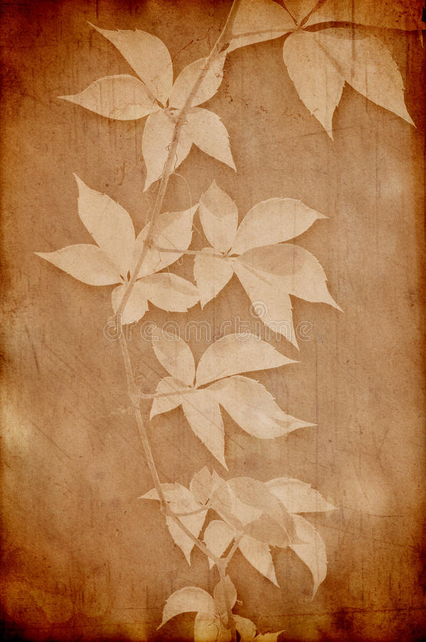 Vintage paper with grape leaves stock illustration
