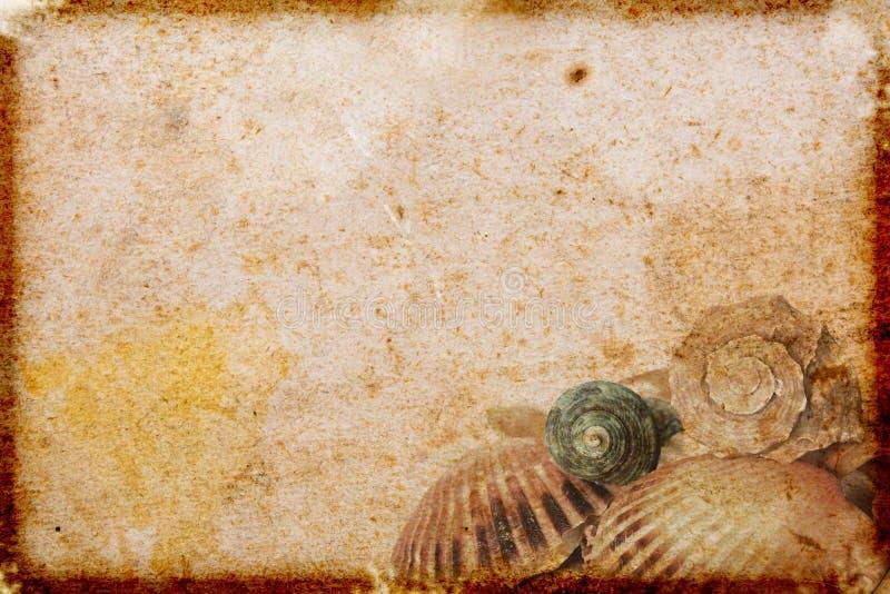 Vintage paper with sea shells. Old grunge textured background vector illustration