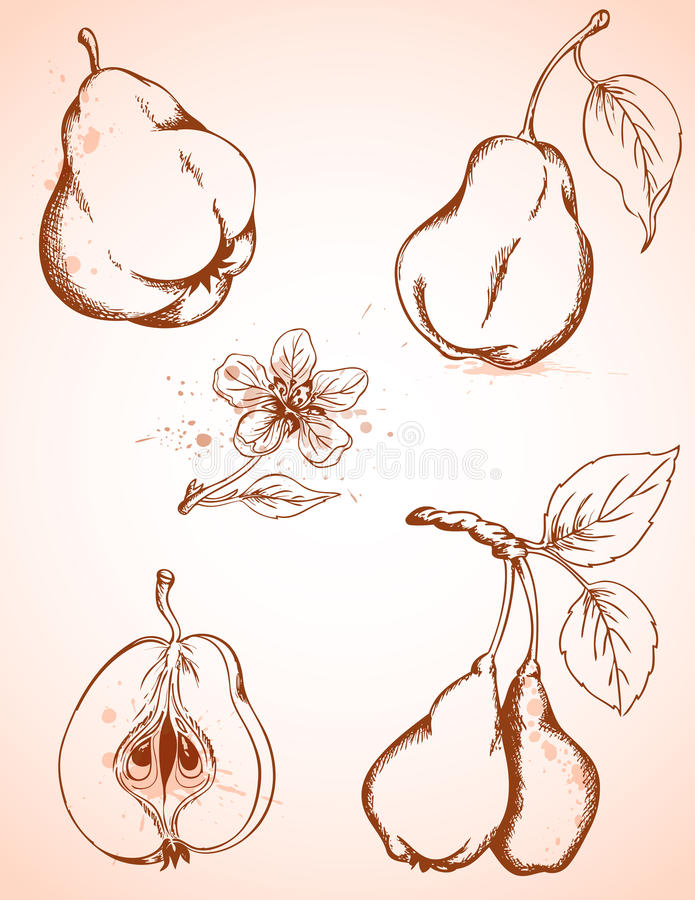 Vintage pears stock photos