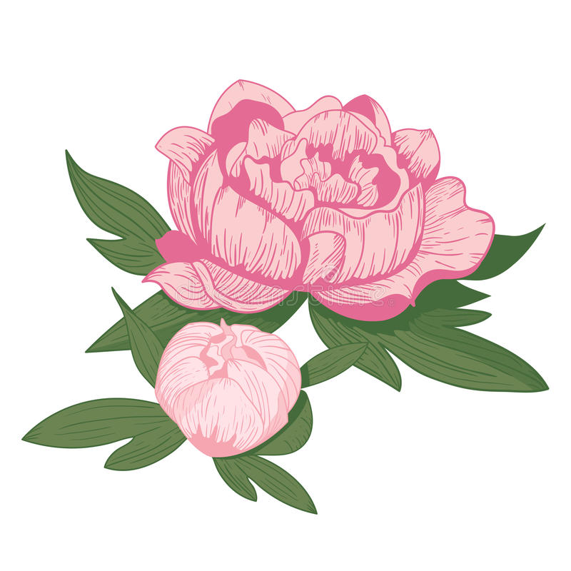 vintage peony flower vector illustration stock vector rh dreamstime com vintage flower vector cdr vintage flower vector free