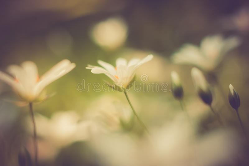 Vintage photo of beautiful small flowers. Useful as background. Beautiful small flowers growing in garden, photographed in sunset light. Photo with vintage mood royalty free stock photography