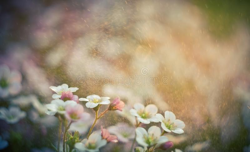 Vintage photo of beautiful small flowers. Useful as background. Beautiful small flowers growing in garden, photographed in sunset light. Photo with vintage mood stock images