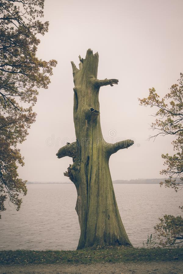 Vintage photo of dead tree on the edge of lake stock image
