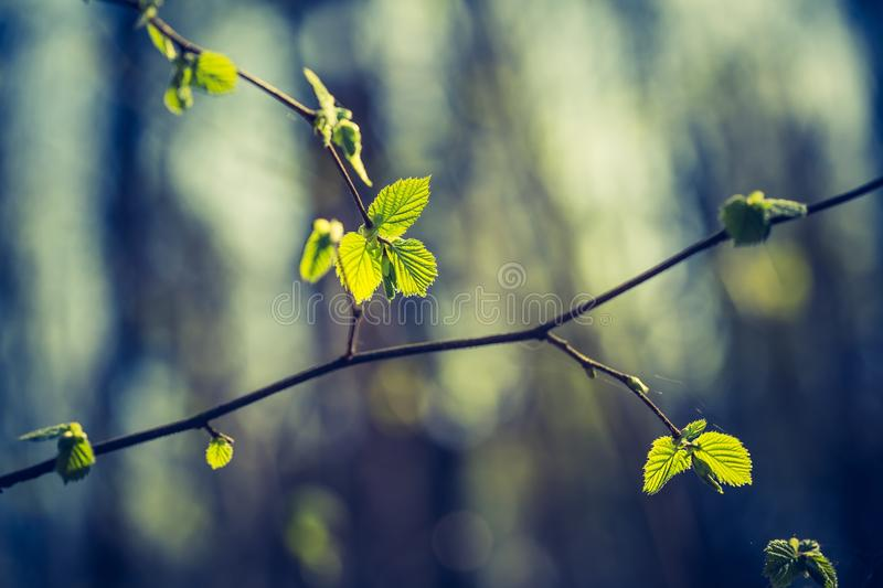 Vintage photo of new leaves on tree branches stock photography