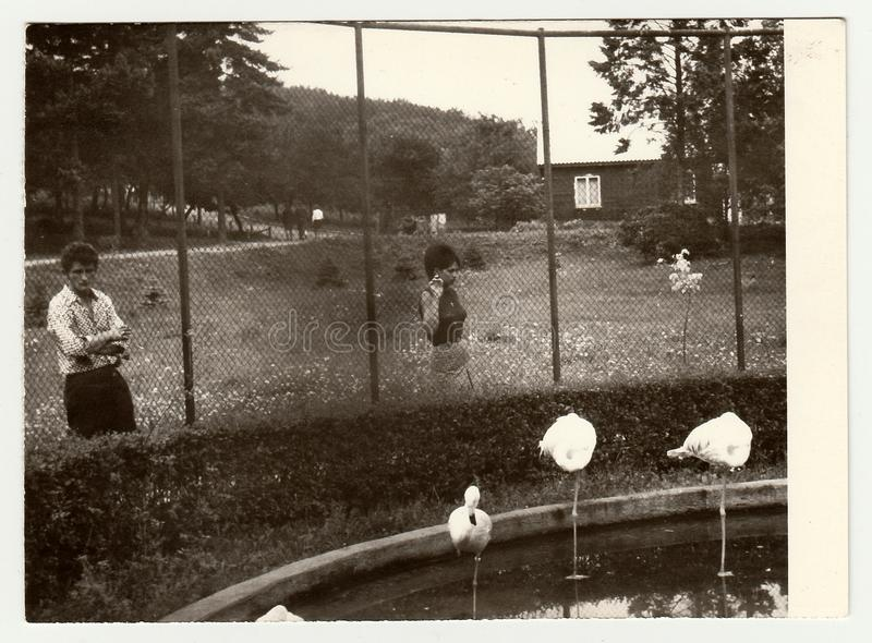 Vintage photo shows people visit ZOO. royalty free stock photography