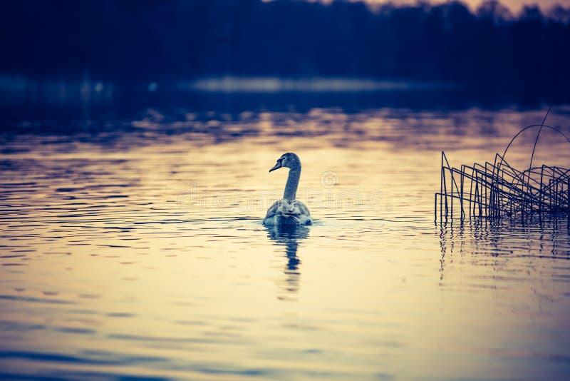 Vintage photo of sunset lake royalty free stock images