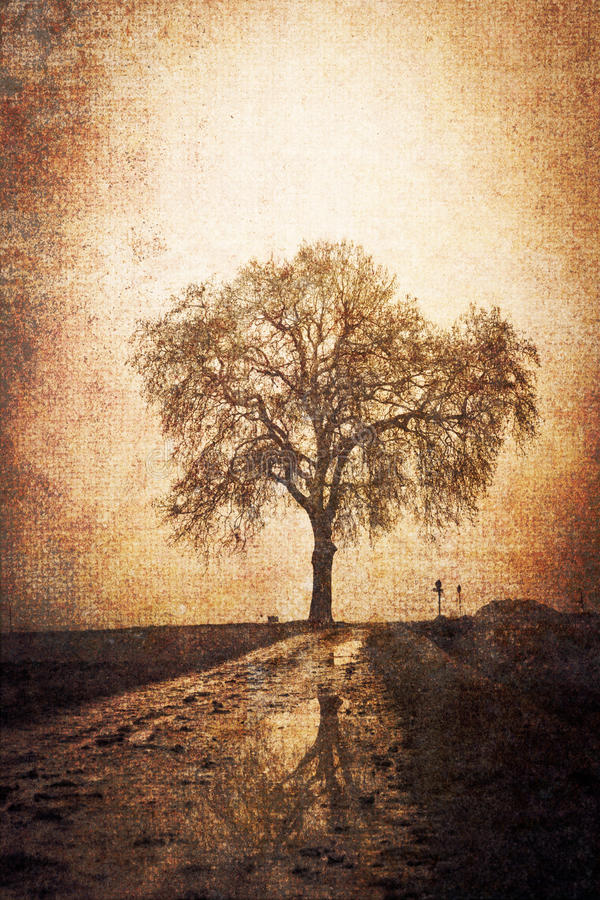 Free Vintage Picture Of A Tree Royalty Free Stock Photo - 19952505