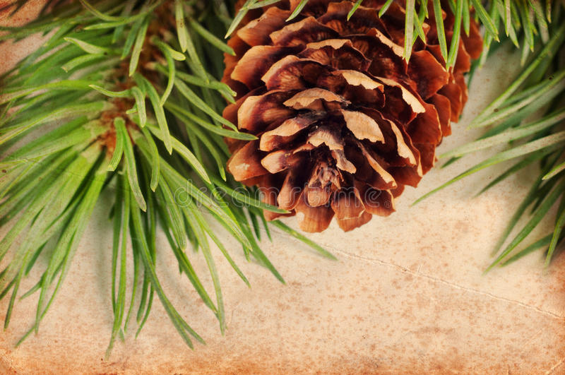 Download Vintage pine branch stock photo. Image of vintage, year - 26845794