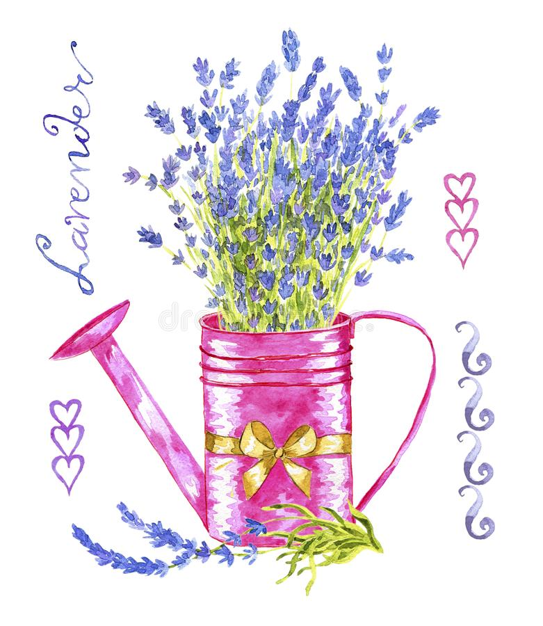 Vintage pink watering can with lavender flowers bunch and decorations royalty free illustration