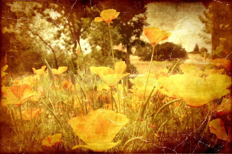 Download Vintage Poppies stock image. Image of abstract, color - 5862769