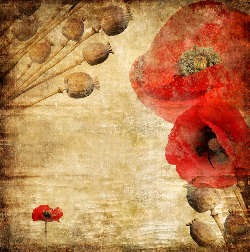Vintage poppy. Vintage background in grunge style with poppy flowers vector illustration