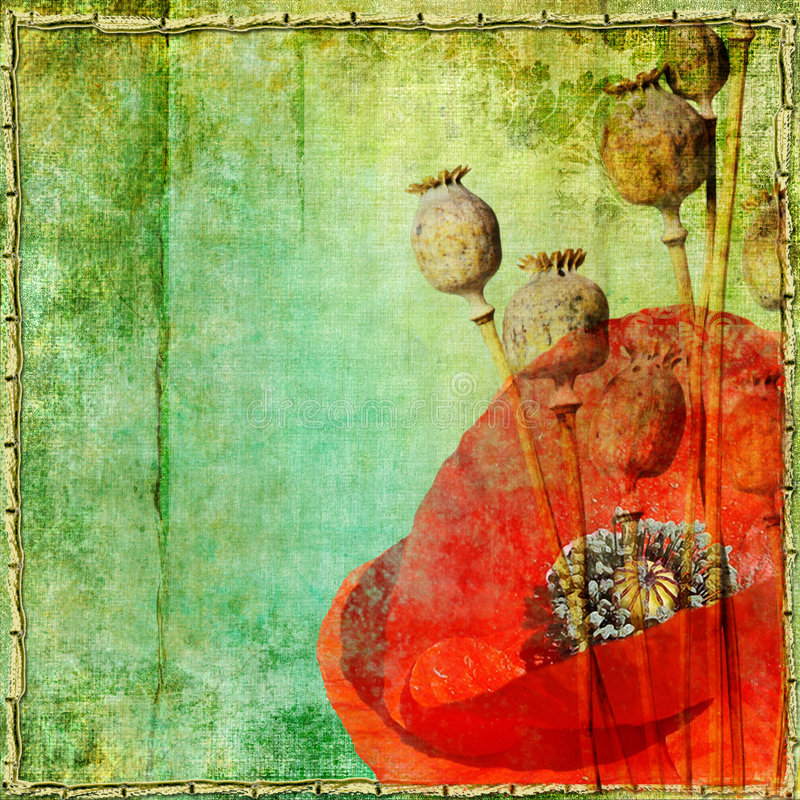 Download Vintage Poppy Stock Photography - Image: 6270822