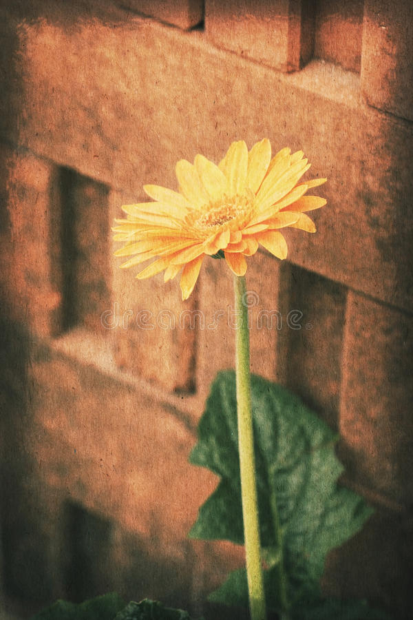 Vintage postcard, Orange gerbera daisy flower over brick wall, soft light on old paper texture style. stock images
