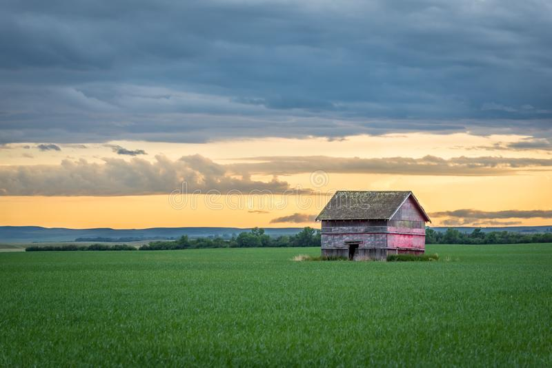Vintage red barn in a wheat field at sunset in Saskatchewan, Canada royalty free stock photography