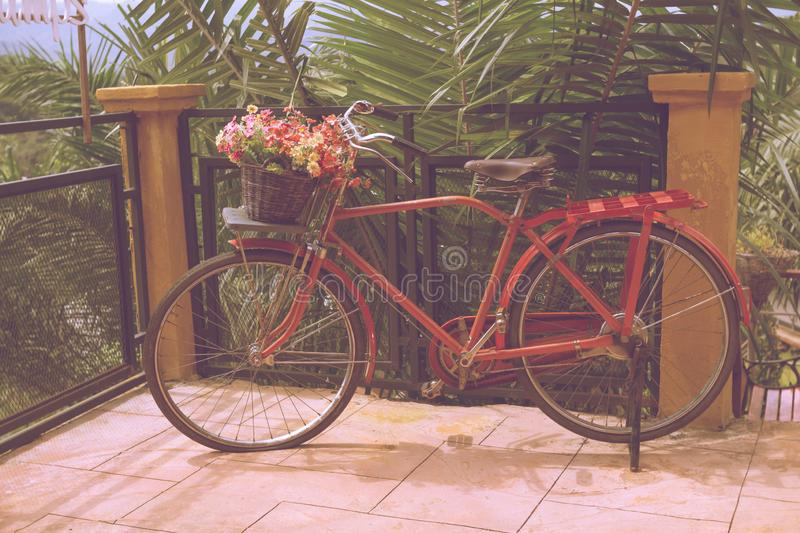 Vintage red bicycle with a bucket of colorful flowers. Decor royalty free stock photography
