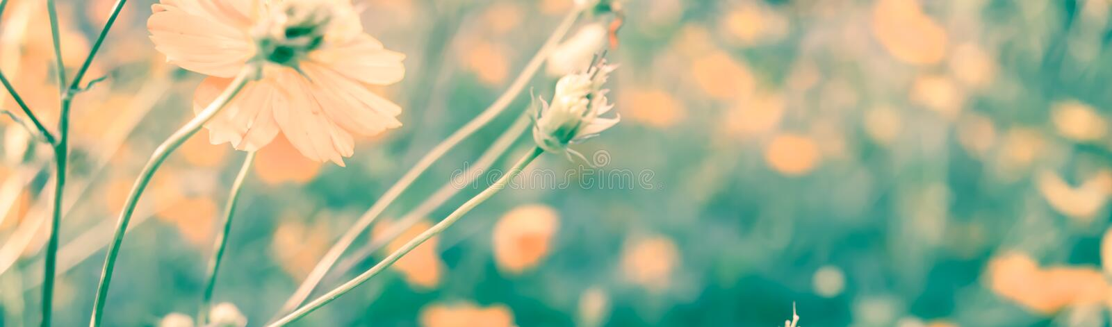 Vintage retro of flower in soft color and blurry style. For background with pastel tone royalty free stock images