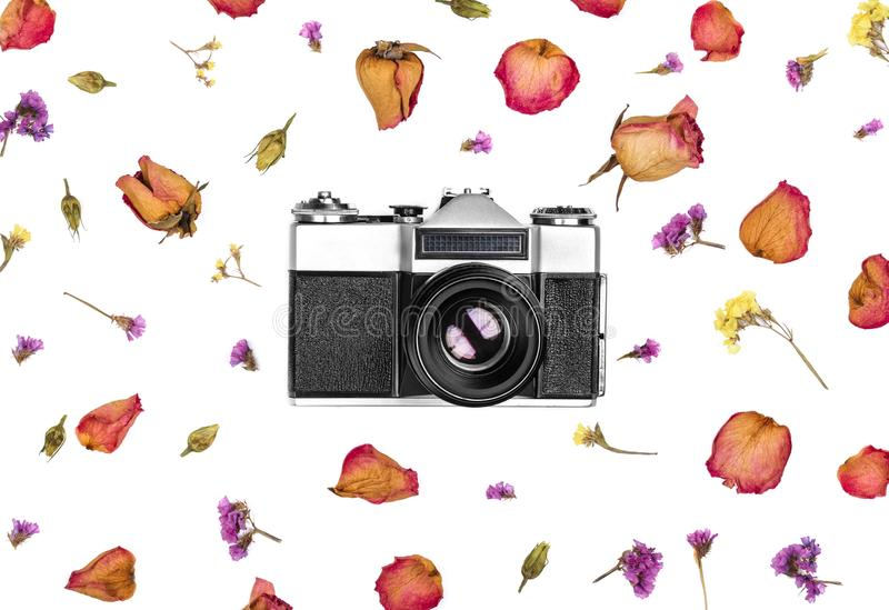 Vintage retro photo camera and dried flowers isolated on white background. Flat lay. Top view royalty free stock photos