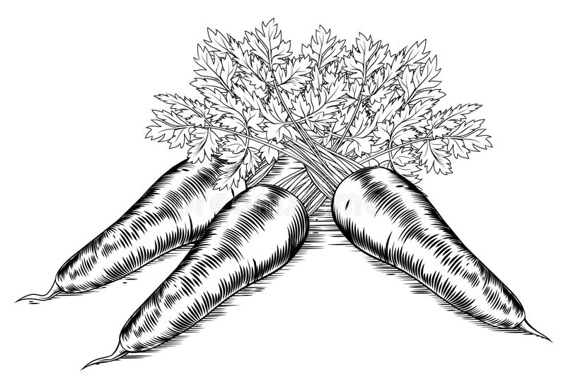 Vintage retro woodcut carrots royalty free illustration