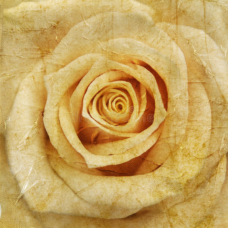 Download Vintage rose stock photo. Image of brown, grubby, lacy - 7657548
