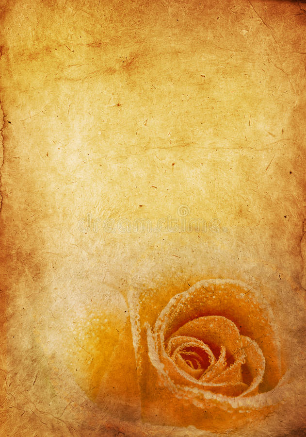 Vintage Rose Background. Rose on vintage weathered paper background royalty free stock photo