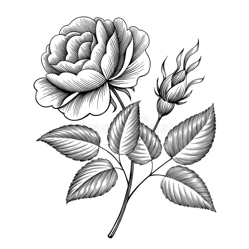 Vintage rose flower engraving calligraphic vector. Vintage rose flower engraving calligraphic Victorian style tattoo botanical vector illustration royalty free illustration