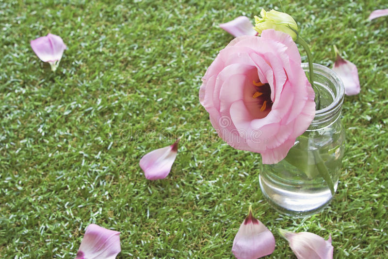 Vintage rose in jar on grass stock photos