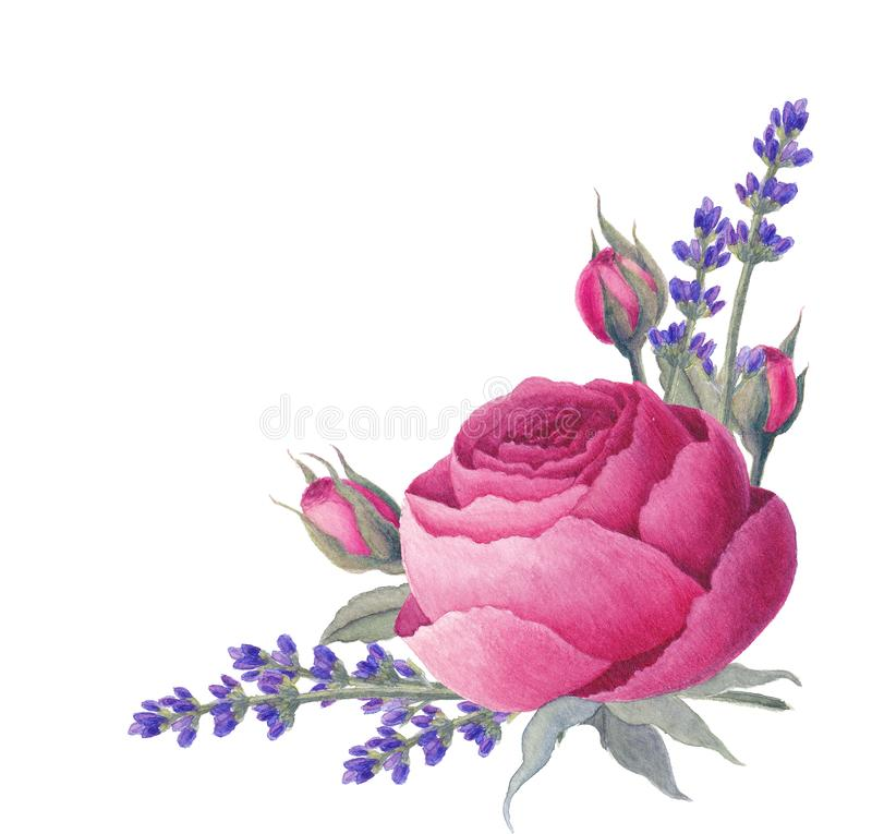 Vintage rose, lavender. Watercolor painting. vector illustration