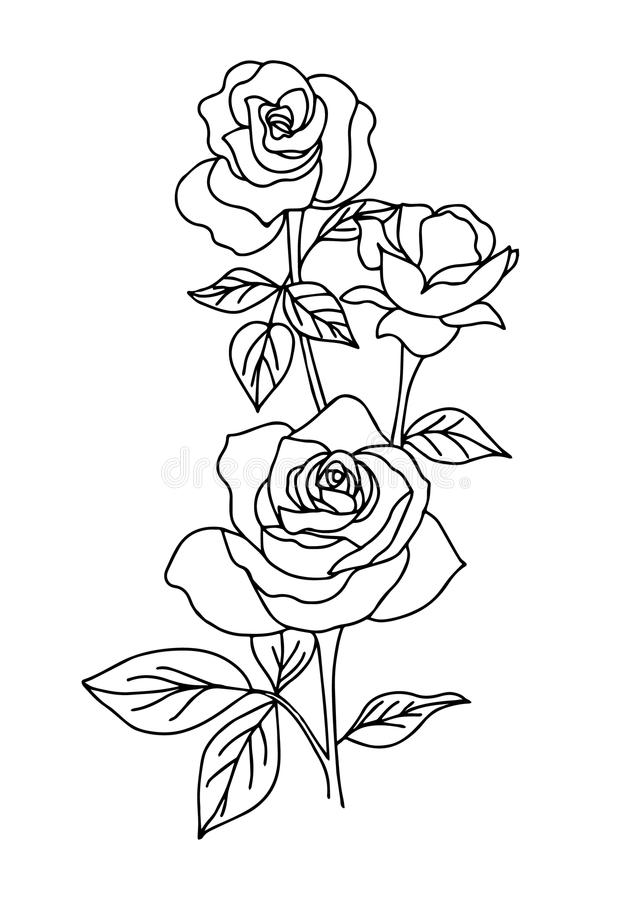 Vintage rose tattoo, flower vector illustration. On white background royalty free illustration