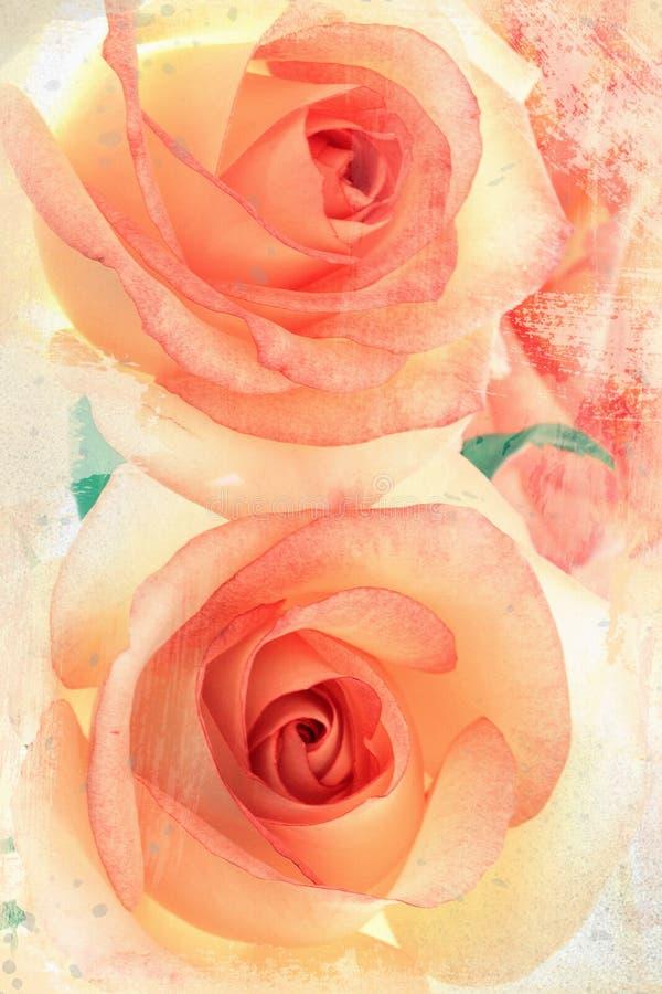 Vintage roses stock photos