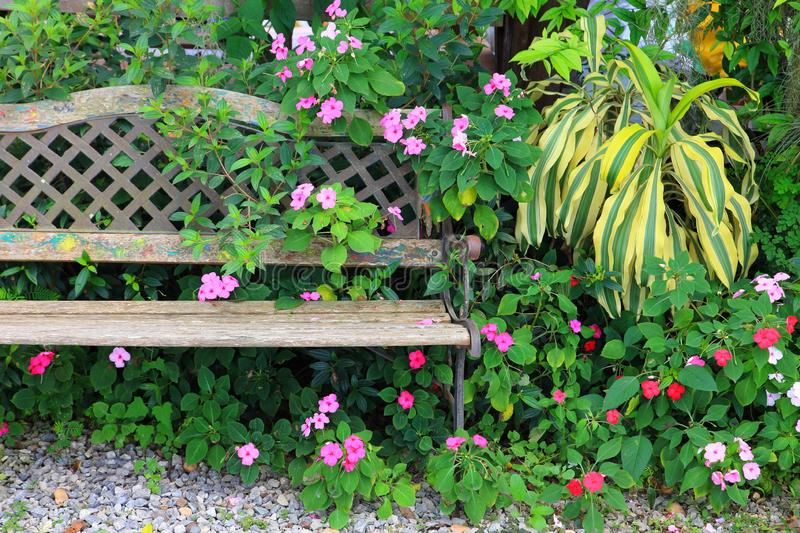 Vintage rustic garden bench with shade loving plant mix in natural style. Vintage rustic garden bench with shade loving plant mix in tropical jungle style stock image