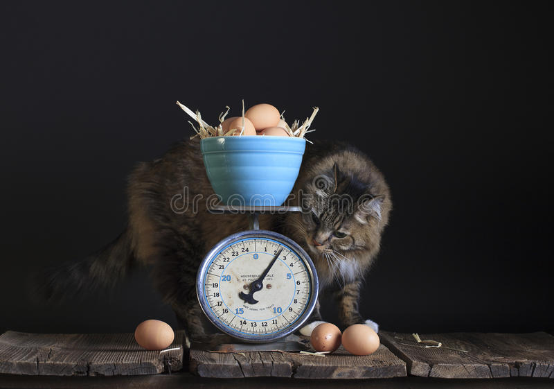 Vintage Scale Eggs and Cat royalty free stock photos