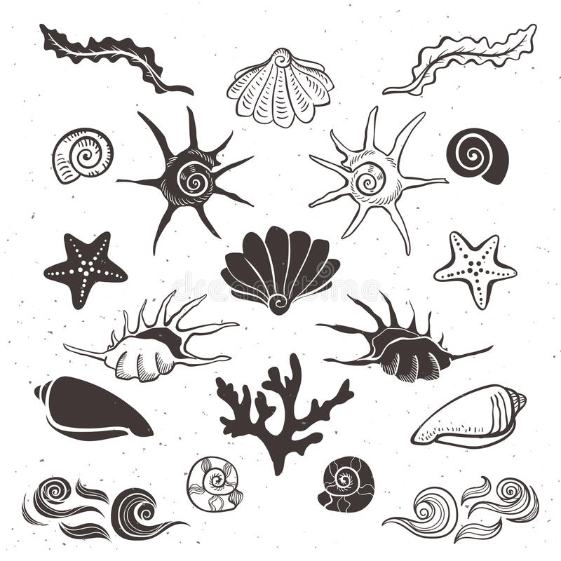 Vintage sea shells, starfish, seaweed, coral and waves. Hand drawn decorative elements on white background royalty free illustration