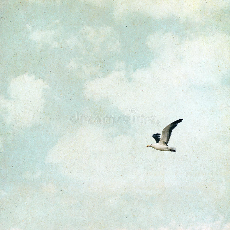 Download Vintage Seagull stock image. Image of green, grain, flying - 31455731
