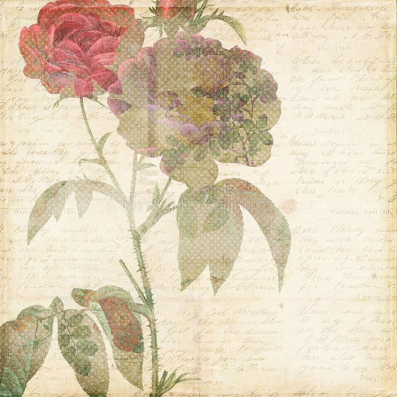 Vintage Shabby Chic background with flowers. Vintage Shabby Chic scrapbook paper background with rose flower and script texture royalty free stock photo