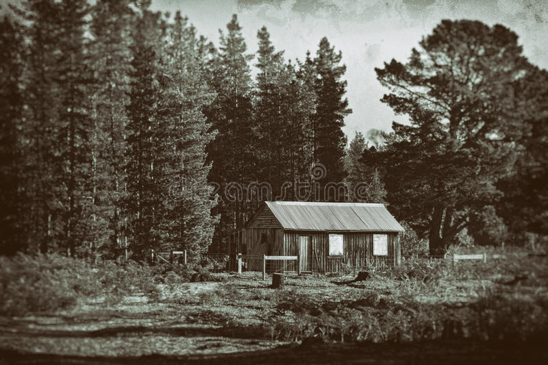 Vintage shack in pine tree forest stock image