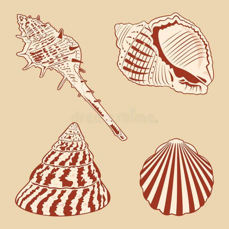 Download Vintage Shells Set. stock vector. Illustration of snail - 27681642