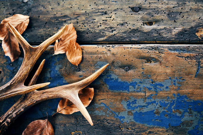 Vintage stag antlers and fallen seasonal leaves royalty free stock photography