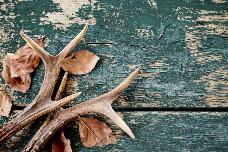 Vintage stag antlers and leaves on timber royalty free stock image