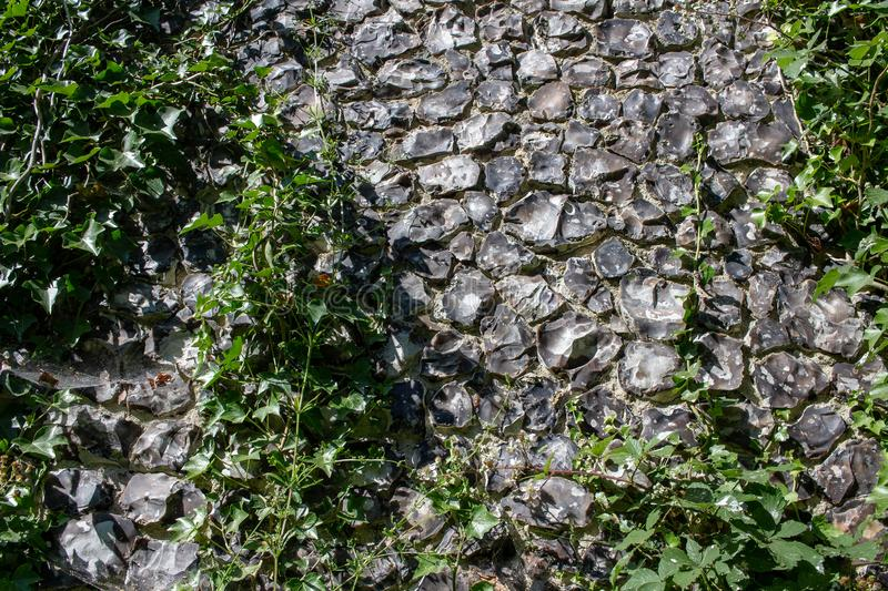 Vintage stone wall pattern background with green plants on it royalty free stock photo