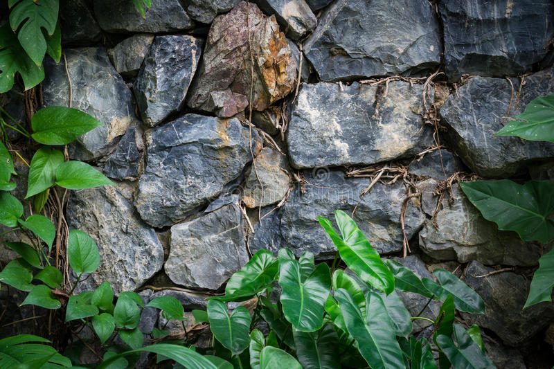 Download Vintage Stone Walls In The Botanica Stock Image   Image Of  Decoration, Background: